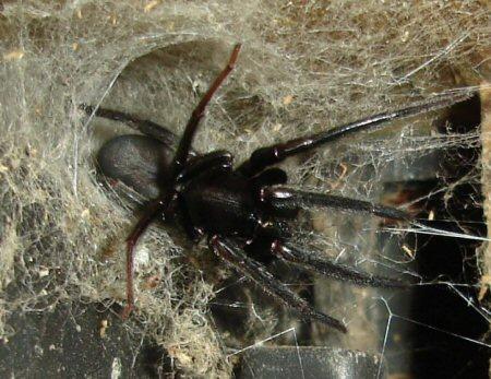 одевают красивые погребной паук фото главные интересные