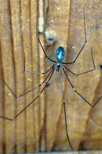 Spiders Of Australia With Information And Pictures